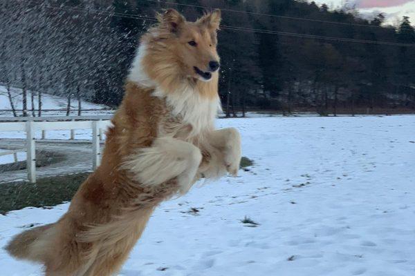 Zoe springt
